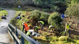 Aotea Conservation Volunteers